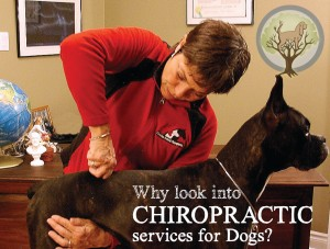 Why look into chiropractic services?