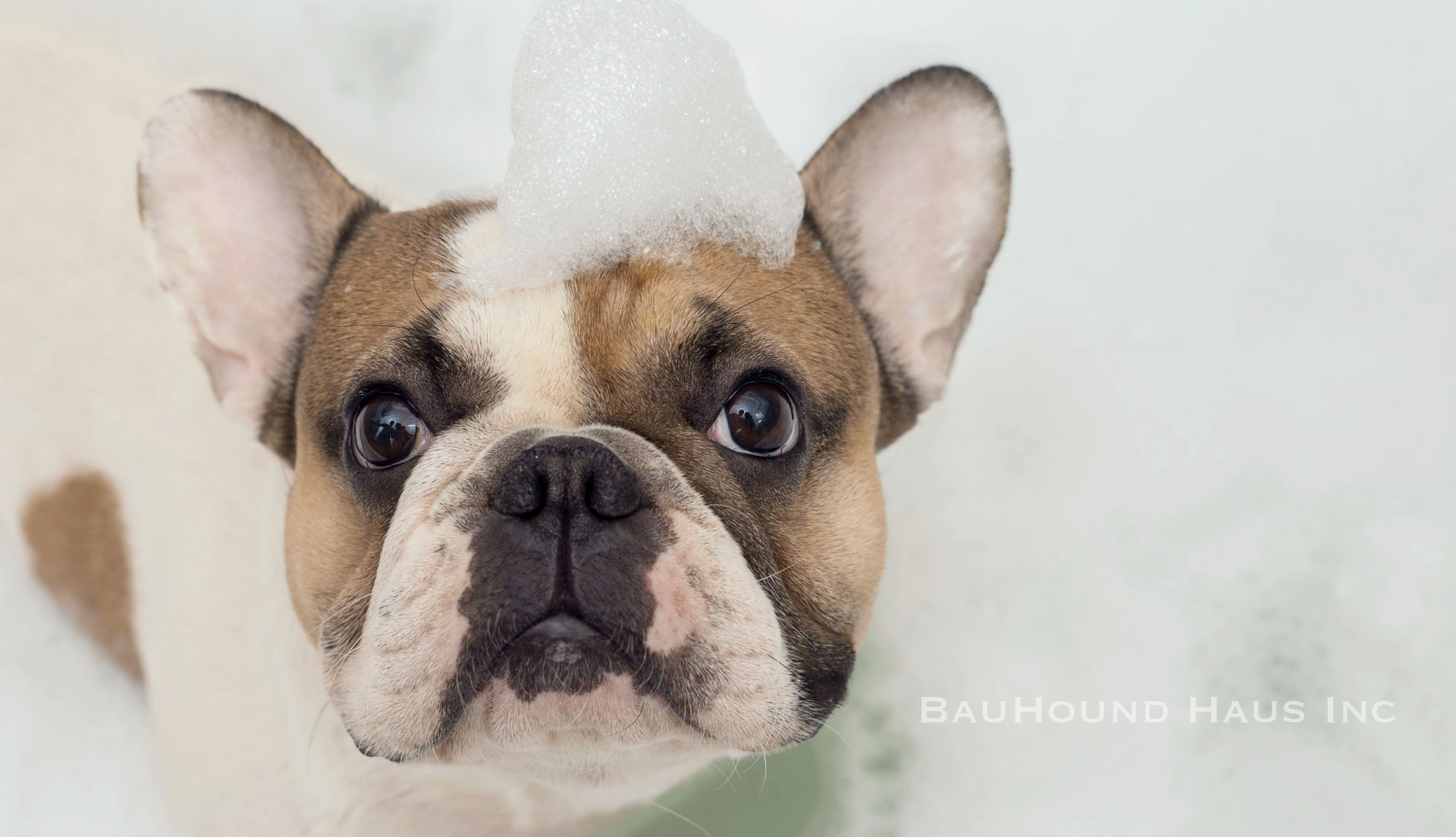 Self Serve Dog Baths in Milton Ontario